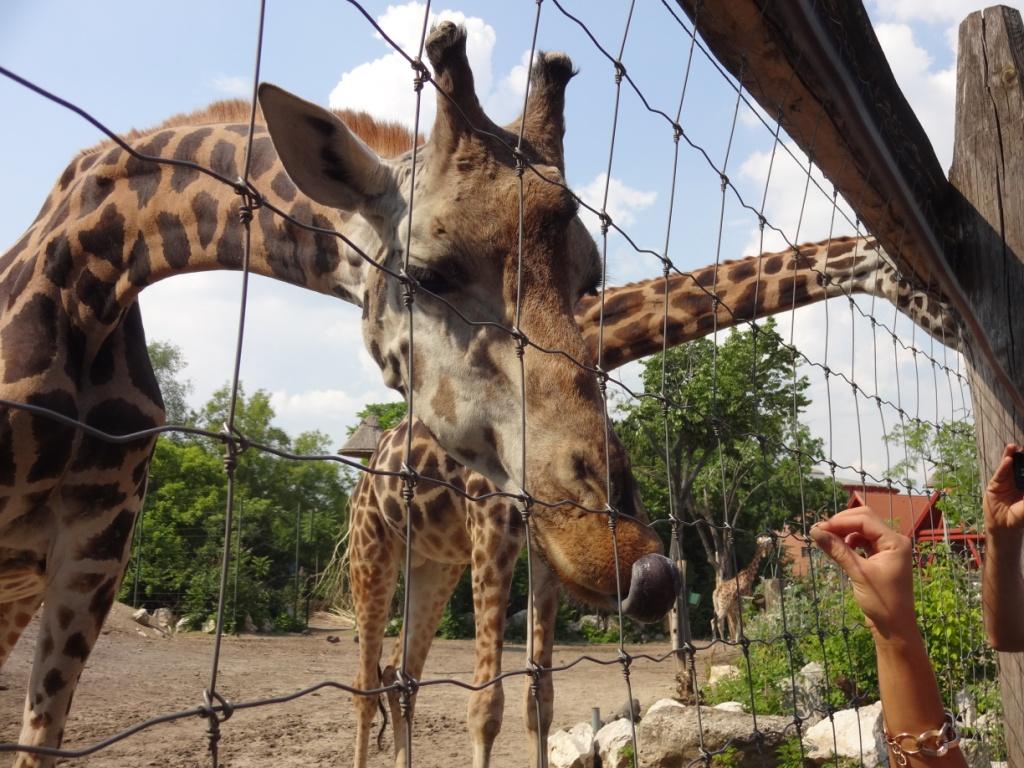 Зоопарк Будапешта. Эти забавные животные.