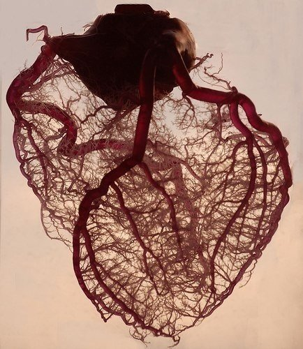 Кровеносные сосуды, отходящие от сердца