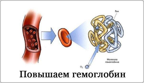 На заметочку: 7 главных продуктов для повышения гемоглобина