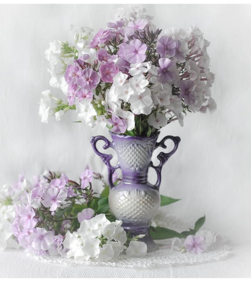 Сиреневый цвет, Цвет чертополоха, Фиалковый цвет, Глициновый цвет - мои любимые цвета...