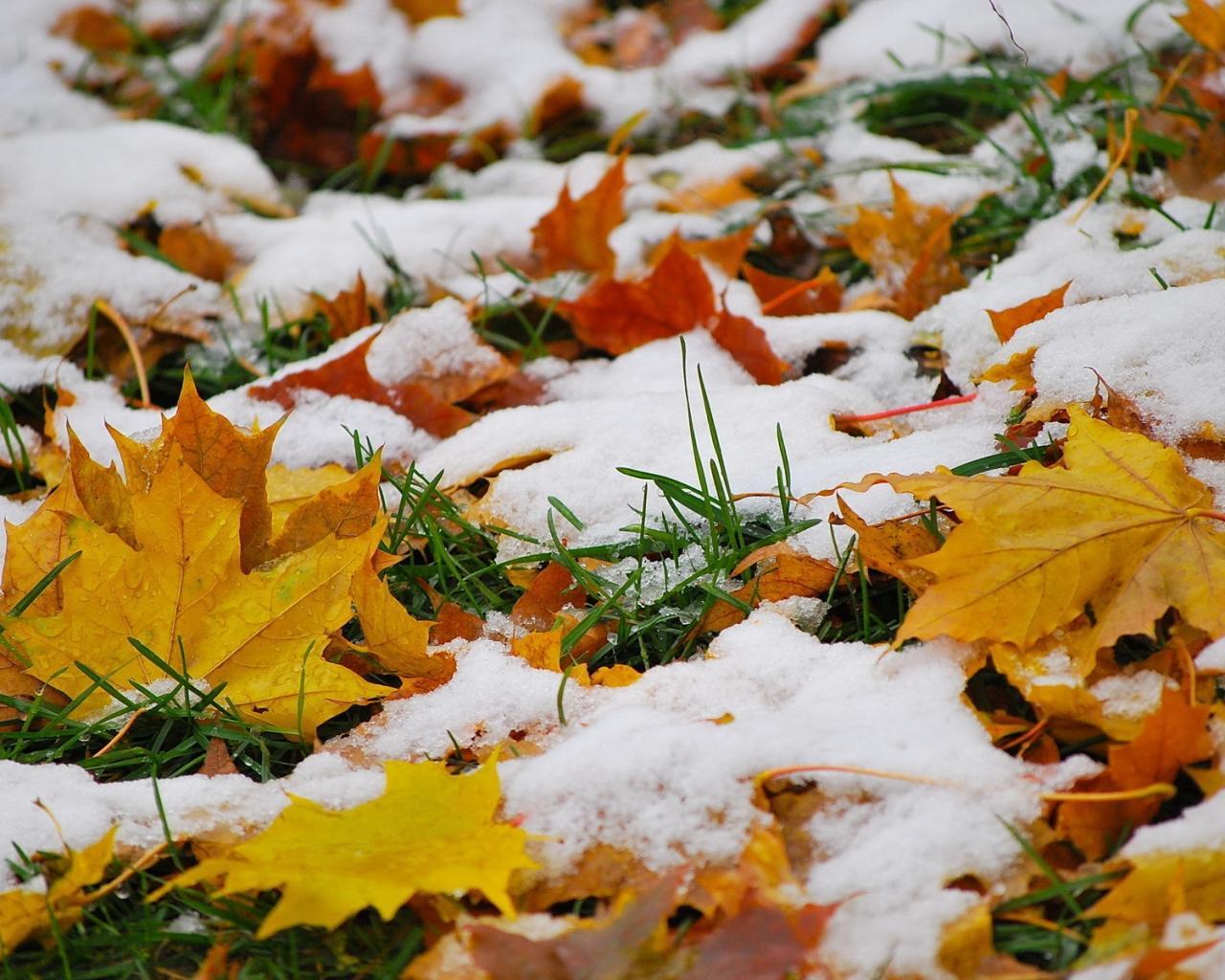 Штормовой ветер и мокрый снег идут к нам...