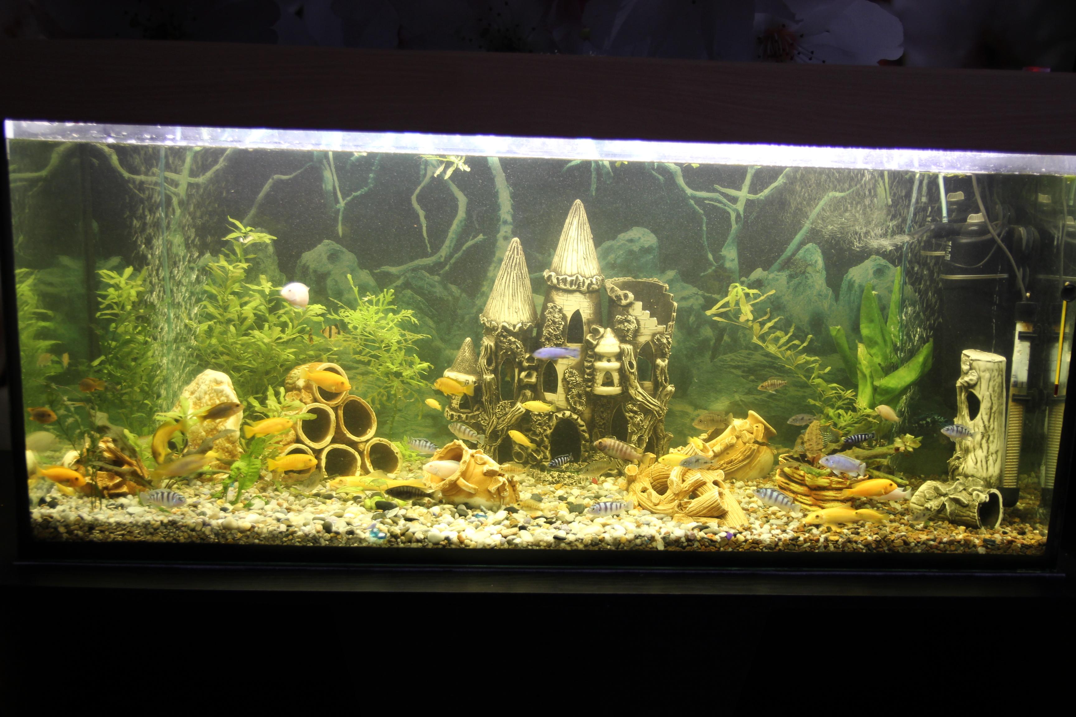 Растения и рыбы в моих аквариумах (для себя).