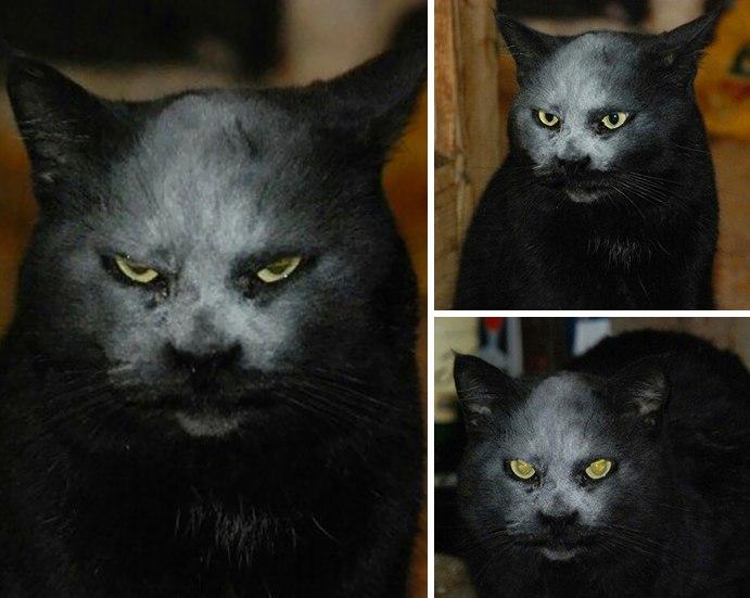 Просто кот испачкался в муке, а как страшно