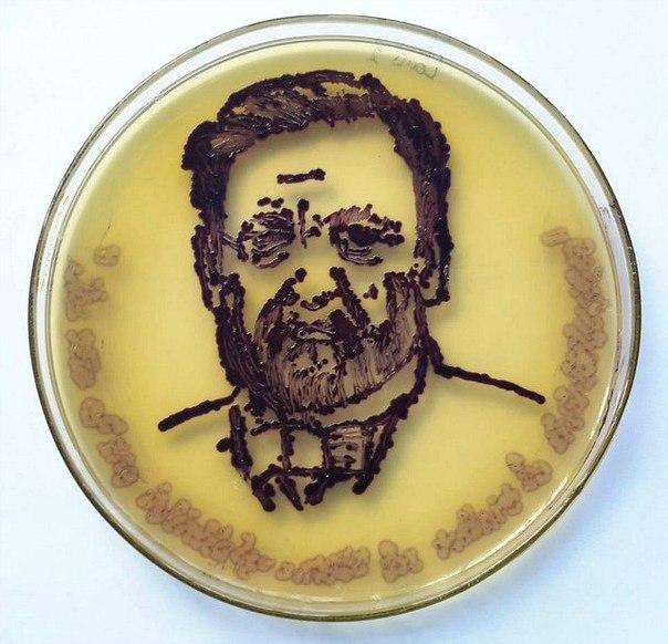 Американское Общество Микробиологии (ASM) предложило своим членам поучаствовать в арт-конкурсе на лучший рисунок с помощью микробов и чашки Петри. Вот что у них получилось: