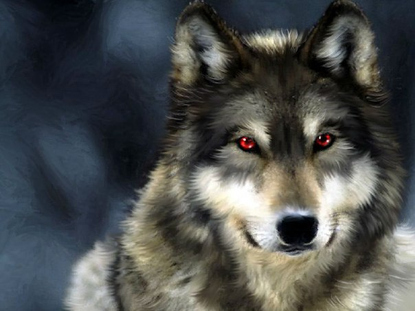Волки.