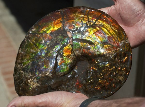 Аммонит. Ракушка, которой 70 млн. лет.