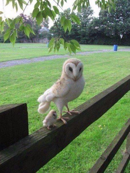 Маленький совенок с мамой