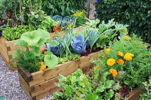 Семена цветов и овощей от агрофирмы Пousk-2. Только лучшие и проверенные сорта