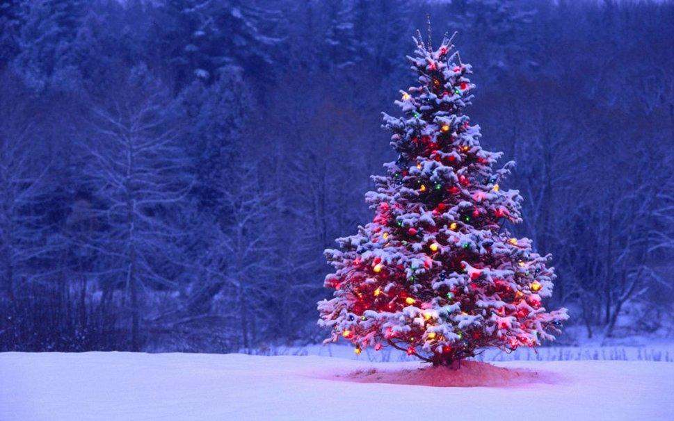 Сбор заказов. Красавицы елочки премиум класса для самого лучшего Нового года. Елки как настоящие - разве, что не пахнут хвоей. Выкуп-2.