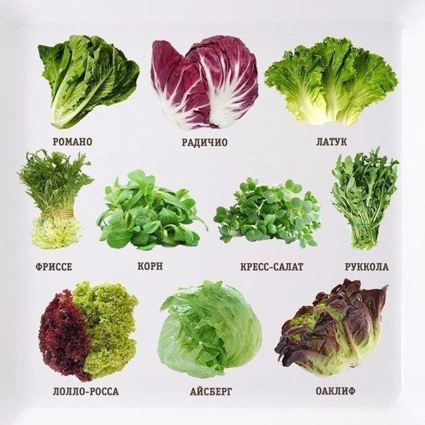 Без клетчатки никуда!!! Любимые салаты