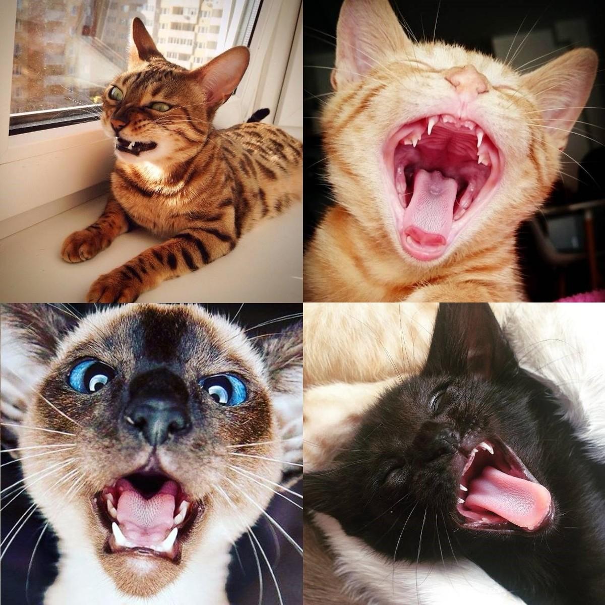 Кот в деталях: фото и факты Немного занимательной анатомии для тех, кто любит кошек.