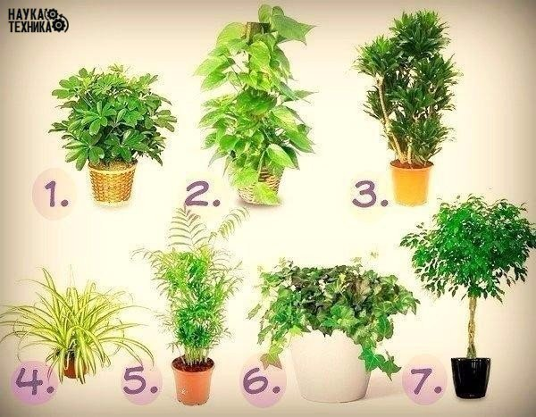 7 лучших растений для очистки воздуха в помещении Забирай на стену, чтобы не потерять!