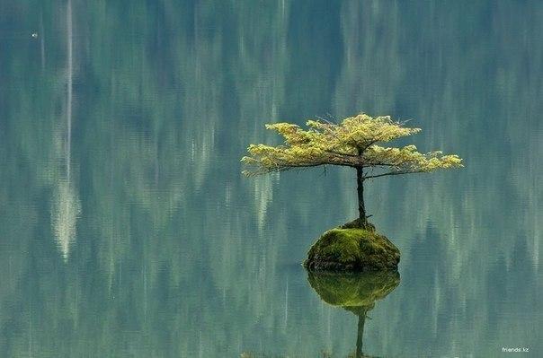 10 принципов Дзен, которые помогут тебе меняться