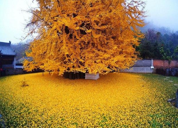 1400-летний исполин в саду буддийского храма Гуаньинь в Китае