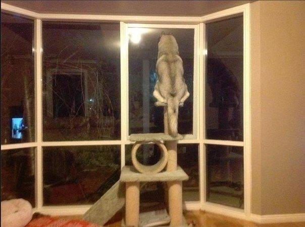 Так наш пес охраняет нас ночью