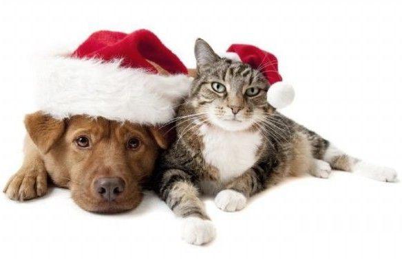 Сбор заказов. Одежда для собак и кошек на все сезоны, лежанки, переноски и многое другое для друзей наших меньших.