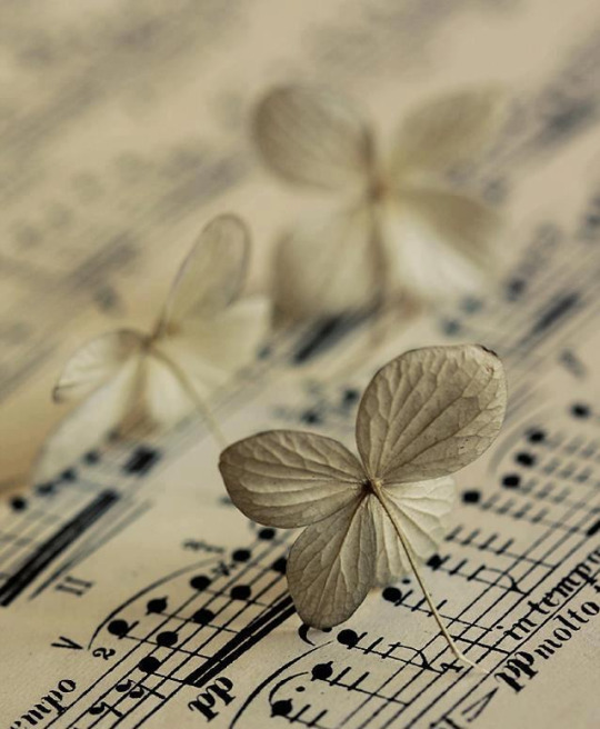 Если Вы умеете говорить Вы умеете петь, если Вы умеете ходить Вы умеете танцевать