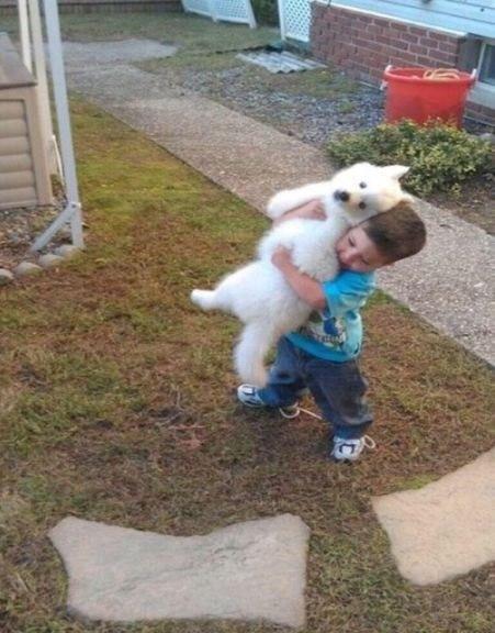 Наш сын притащил соседского щенка со словами, что теперь они друзья