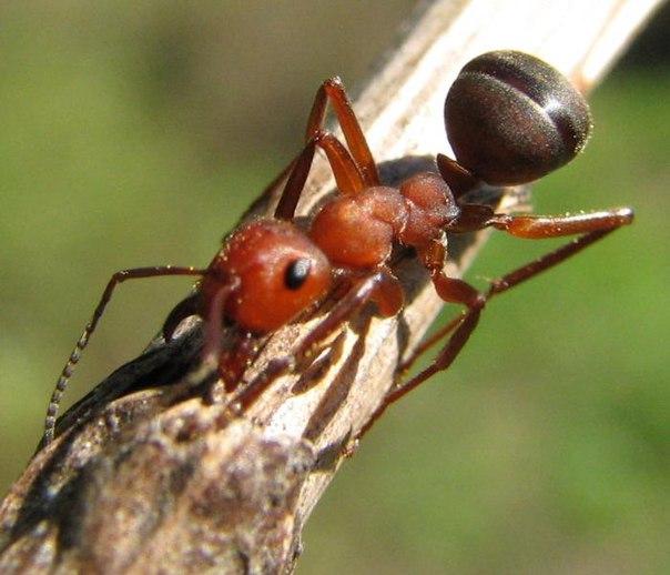 Хвори всем знакомые лечат насекомые!