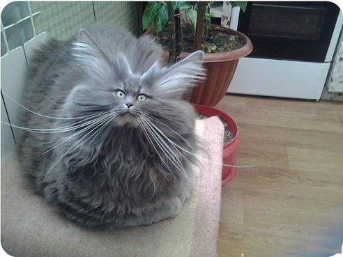 Сушите кота правильно