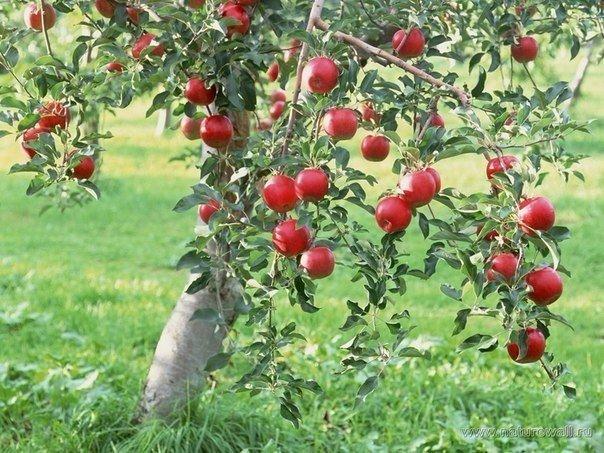 7 маленьких полезностей для огородника.