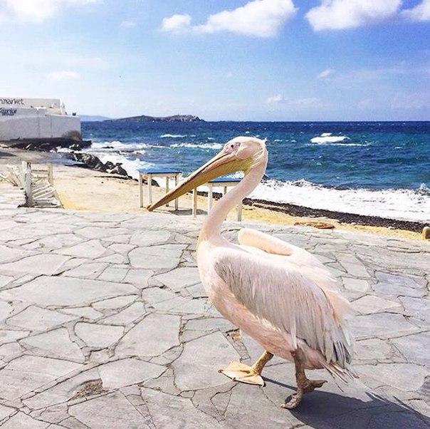 Mykonos, Kikladhes, Greece