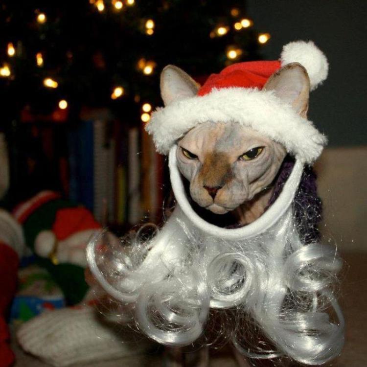 С возрастом вера в Деда Мороза проходит, а вот ожидание чуда остается...