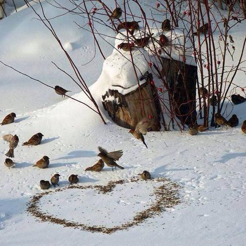 Рассыпьте крошки на снегу.