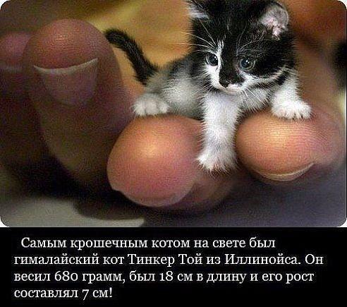 Самый крошечный кот