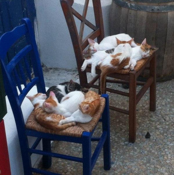 Утро вечера мудренее. Греческие коты уже свернулись в клубочек и сладко спят. Милота!