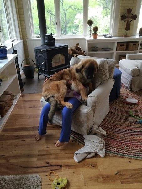 Собаки, которые плевать хотели на ваше личное пространство :)