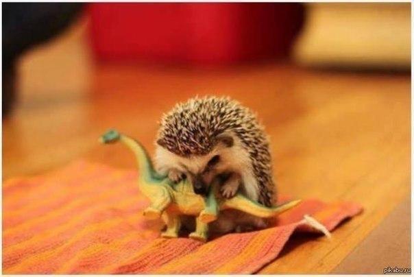 Возможная причина вымирания динозавров...