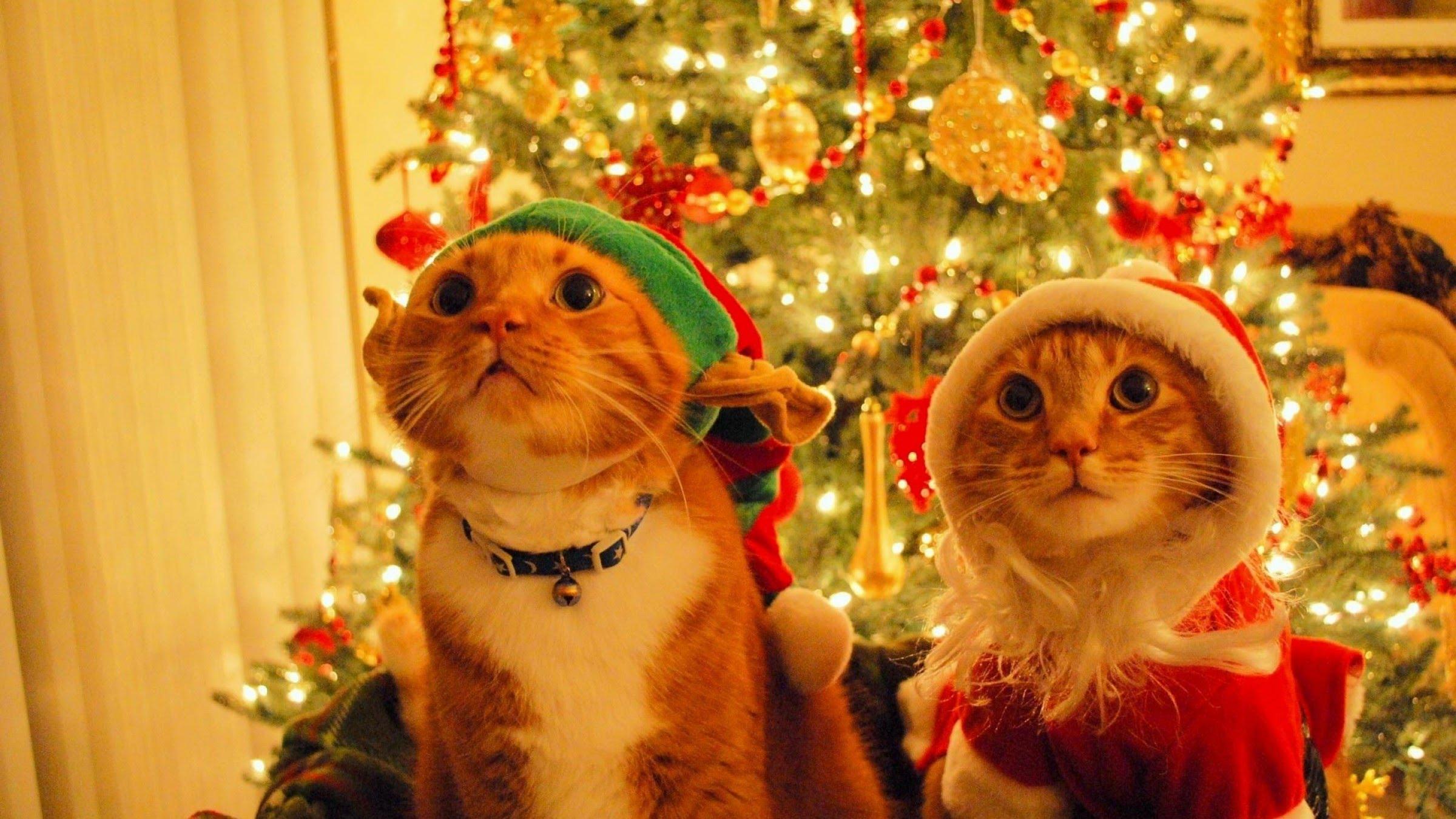 Дедушка Мороз, я Новый Год буду встречать со своими одинокими подругами... Пришли, пожалуйста, к нам на праздник своих отморозков.