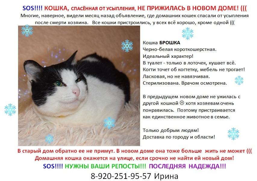 Для неравнодушных любителей животных: заберите красивую, воспитанную, ласковую кошку))