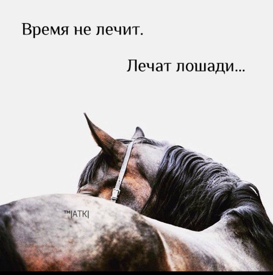 Сбор помощи сгоревшему конному клубу Берендеево, Нижегородская область.