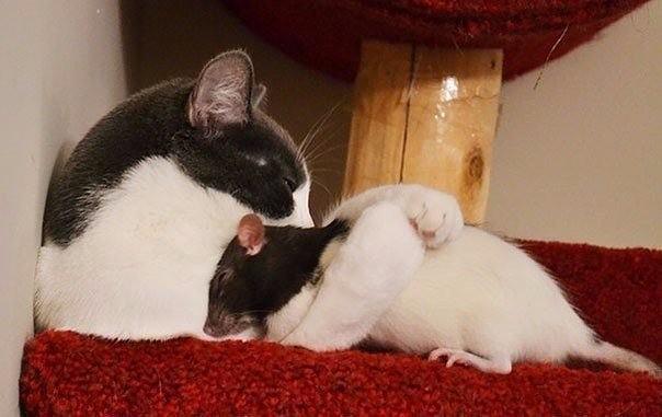 Яркие и необъяснимые примеры дружбы животных