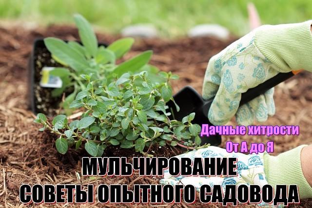 Мульчирование. Советы опытного садовода