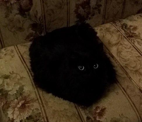 Чёрная субстанция с глазами