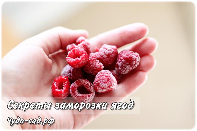 То, что нужно знать о заморозке ягод на зиму: полезные сведения для хозяйки