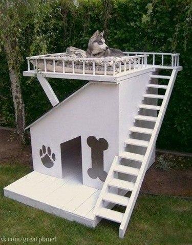 Домик для coбаки.