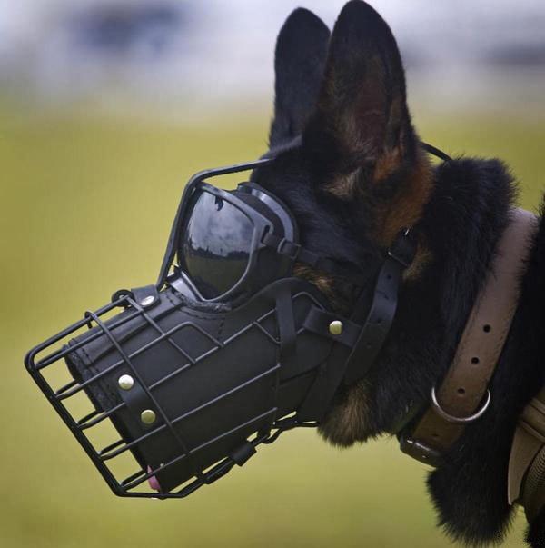 Овчарка из корпуса морской пехоты K9 в защитной маске. Такие надевают перед прыжком с парашютом.