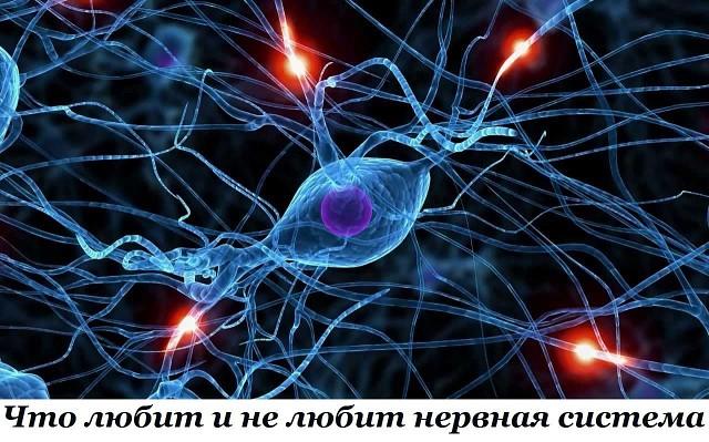 Что любит и не любит нервная система