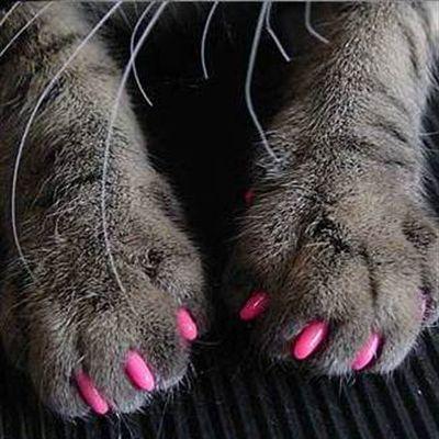 Антицарапки - 4. Мягкие защитные колпачки на когти кошек. Уже в наличии. Нон-стоп.