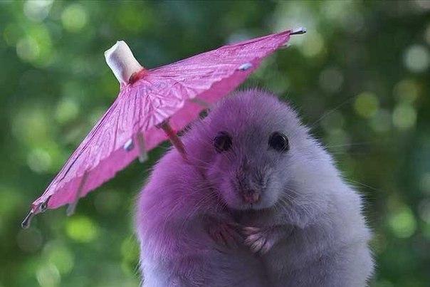 Теперь ни дождь, ни солнце не помеха