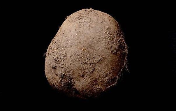 Эта фотография картофеля на чёрном фоне была продана на аукционе за 1 миллион долларов. У меня всё