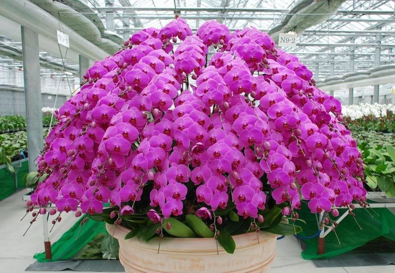 Безумно красивая орхидея