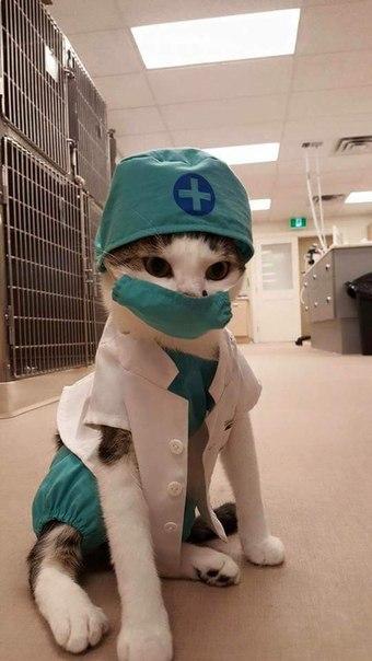 Лечебный кот