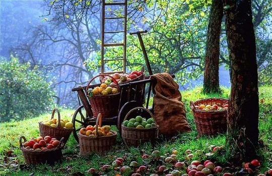 Все во фруктовый сад...