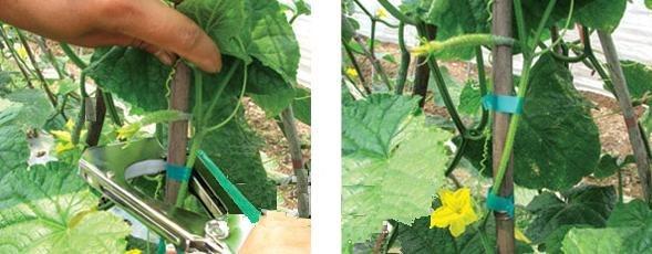 Экспресс - сбор 2 дня Автоматический степлер для подвязывания рассады, растений, аэраторные сандали рыхлители почвы
