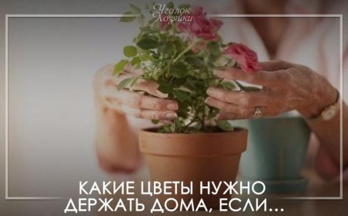 Какие цветы нужно держать дома, если